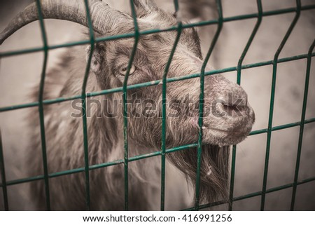 goat in a cage
