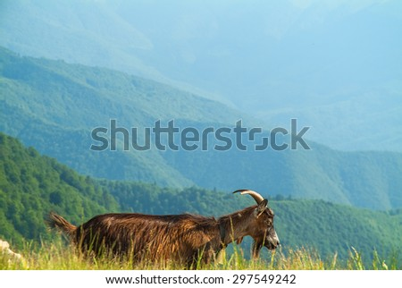 goat on green hills - stock photo