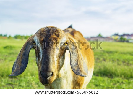 Floppy Ears Stock Images Royalty Free Images Amp Vectors