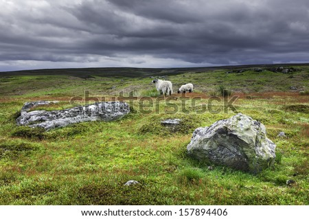 ... in north Yorkshire on a stormy late spring morning. - stock photo