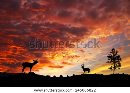 goats under red sky - stock photo
