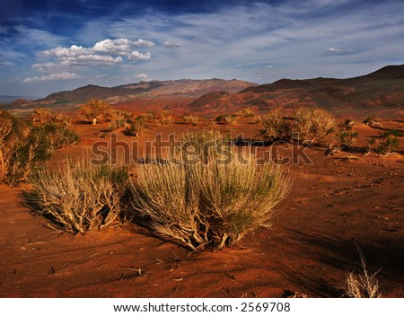 Gobi bush on sunset - stock photo