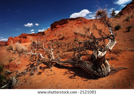 Gobi Desert tree - stock photo