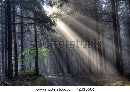 God beams - coniferous forest early in the morning - stock photo
