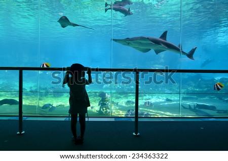 GOLD COAST, AUS -  NOV 06 2014:Child (Talya Ben-Ari age 04) looks at sharks at Shark Bay in Sea World Gold Coast Australia.It is the world's largest man-made lagoon system for sharks. - stock photo