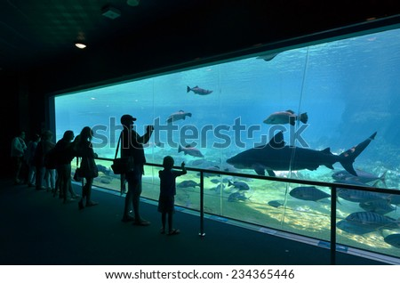 GOLD COAST, AUS -  NOV 06 2014:Visitors at Sharks bay in Sea World Gold Coast Australia.It is the world's largest man-made lagoon system for sharks. - stock photo