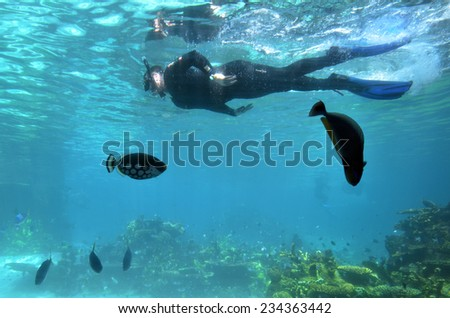 GOLD COAST, AUS -  NOV 11 2014:Visitors dive in Shark Bay touch pool at Sea World Gold Coast Australia.It is the world's largest man-made lagoon system for sharks. - stock photo