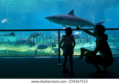 GOLD COAST, AUS -  NOV 06 2014:Visitors looks at sharks at Shark Bay in Sea World Gold Coast Australia.It is the world's largest man-made lagoon system for sharks. - stock photo
