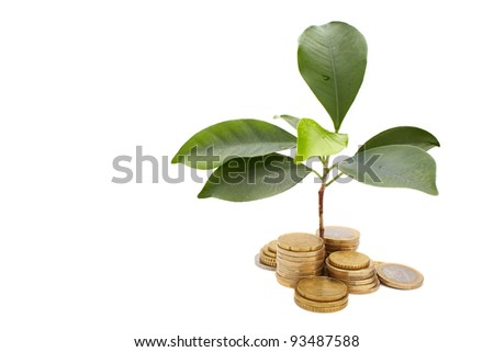 Gold coins and plant - stock photo