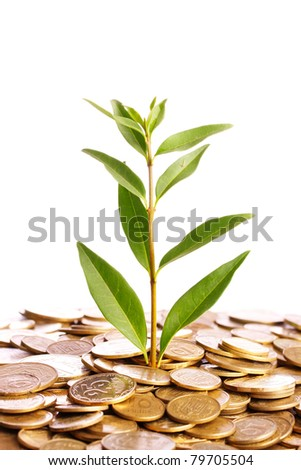 gold coins and plant isolated on white. Ukrainian coins