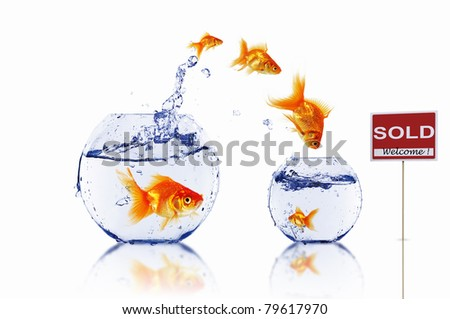 gold fish in a fishbowl with sign of sale - stock photo