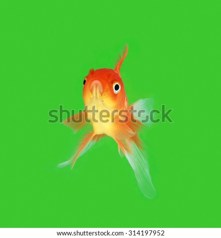 Gold fish. on green background - stock photo