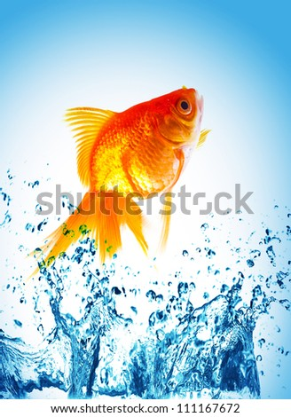 gold fish on water splash - stock photo
