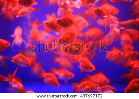 golden fish tank spielen