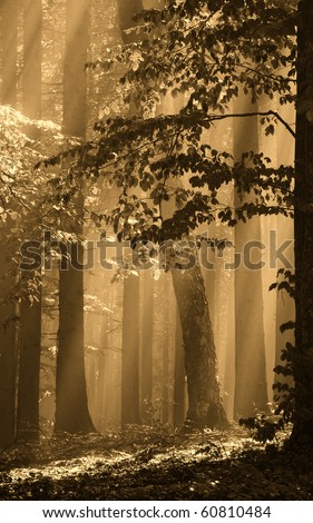 Gold forest - stock photo
