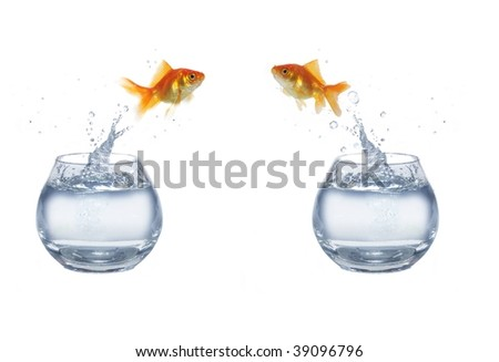 gold jumping out from aquarium on white background fish - stock photo
