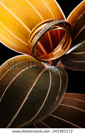 Gold ring with diamonds standing on green orchid leaves with white stripes, on black background
