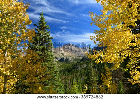 golden aspen trees in fall, with long's peak,  in rocky mountain national park, colorado