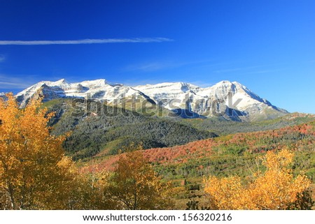 Golden aspens beneath Mt. Timpanogos, Utah, USA.