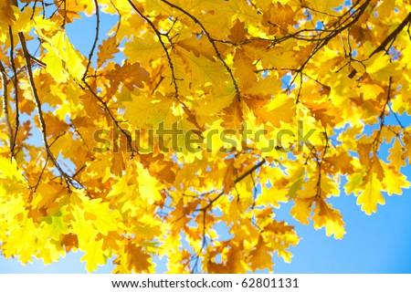 Golden autumn - stock photo