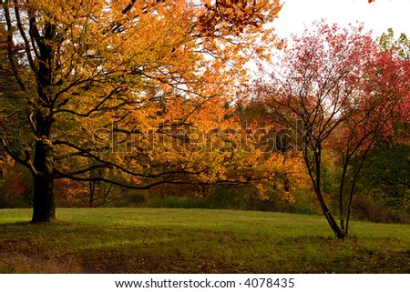 Golden autumn day - stock photo