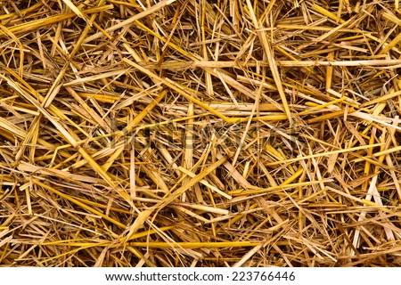 Golden autumn fall hay straw texture background wallpaper, closeup - stock photo