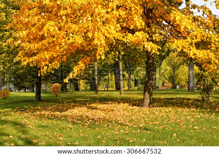 Golden autumn in the park, trees and grass covered by yellow leaves