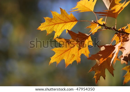 Golden autumn leaves. Abstract background - stock photo