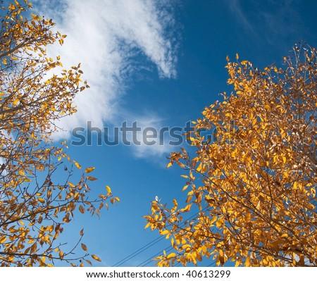Golden autumn trees - stock photo
