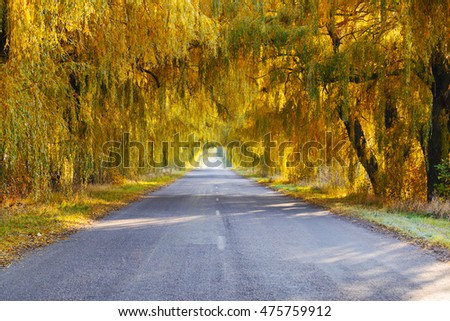 Golden autumn willow trees in an arch shape along the road