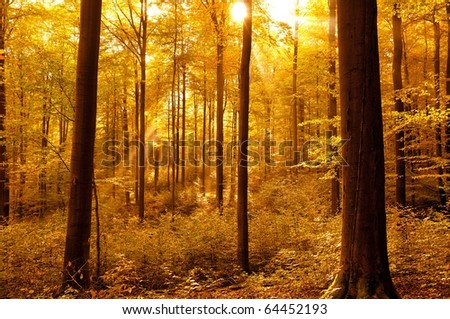 Golden autumnal forest with sunbeams - stock photo