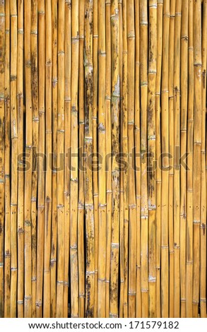 Golden bamboo arranged as the background fabric wall