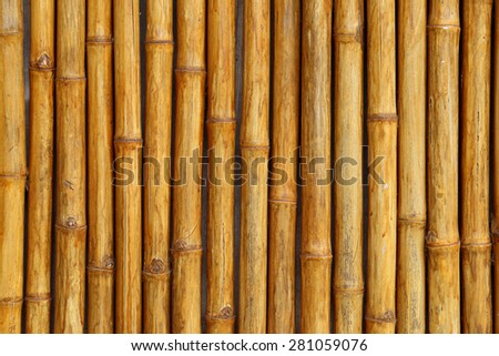 Golden bamboo fence background. - stock photo
