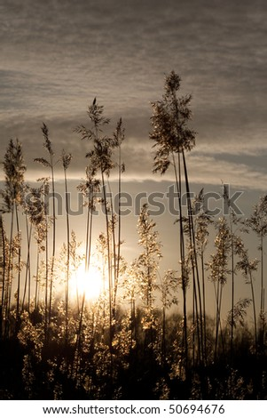 Golden bent like a palm tree in sunset - stock photo