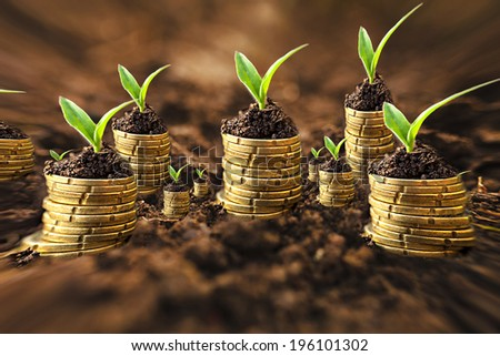 Golden coins in soil with young plant. Money growth concept. Pincushion lens use. - stock photo