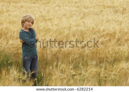 golden corn - stock photo