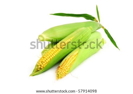 Golden corn ears isolated on white background - stock photo