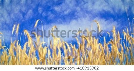 golden corn - illustration based on own photo image - stock photo