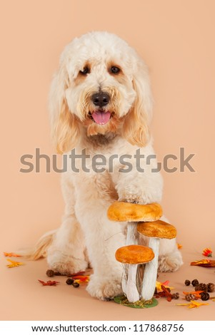 Golden doodle with autumn leaves