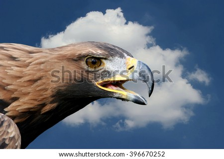 golden eagle in the sky - stock photo