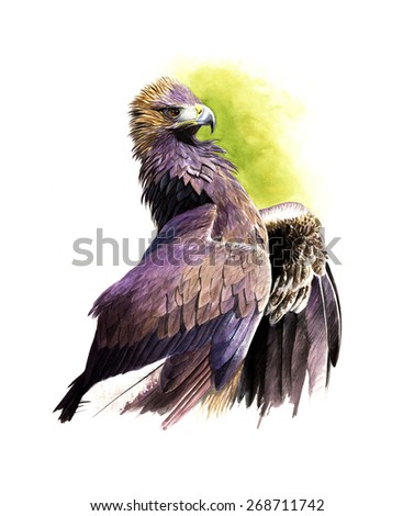 Golden eagle watercolor painting - stock photo