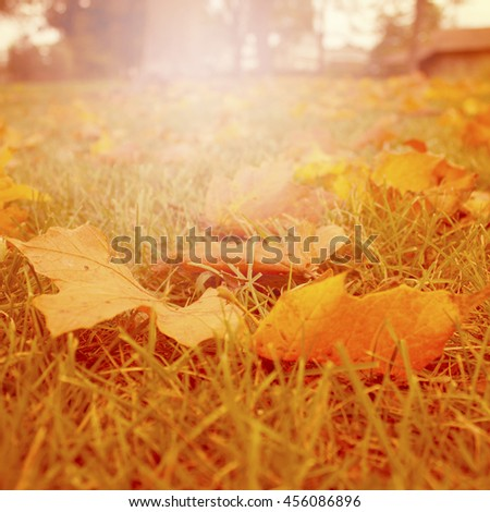 Golden fall maple leaf, nature background. - stock photo