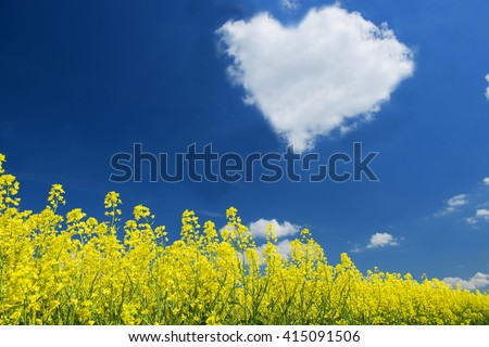 golden field of flowering rapeseed with beautiful clouds on sky - brassica napus - plant for green energy and oil industry, cloud hart - stock photo