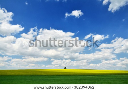 golden field of flowering rapeseed with beautiful clouds on sky with wonderful green field and  small tree on horizon - brassica napus - wonderful spring wallpaper - stock photo