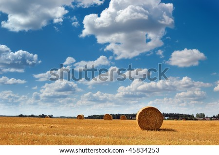 Golden field with round hay bales against a picturesque cloudy sky on a perfect sunny day