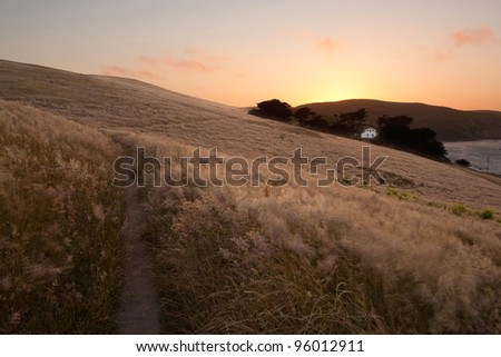 Golden fields on a tranquil evening - stock photo