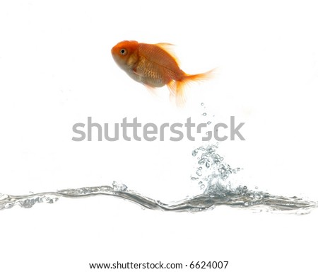 Golden fish flying on water