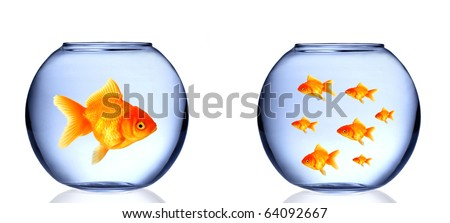 GOlden fish in aquarium - stock photo