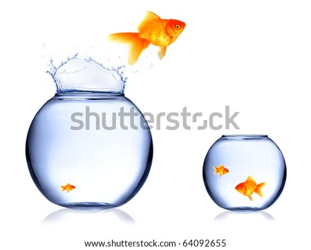 Golden fish jumping out of aquarium - stock photo