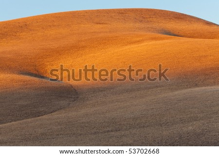 Golden gently rolling hills of grassland in a dry climate